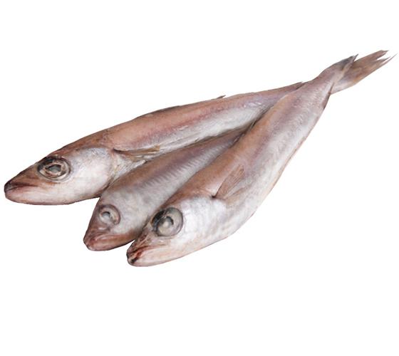 путассу рыба фото